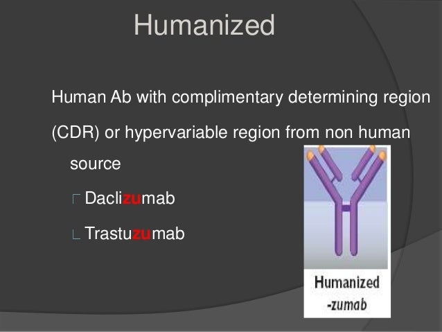 chimeric antibodies production and applications